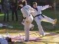 viacon-pokaz-taekwondo6
