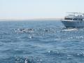 nurkowanie-z-delfinami